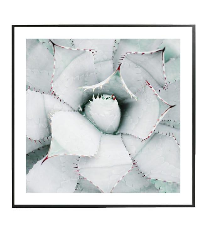 fotografie agave dekorace na zeď