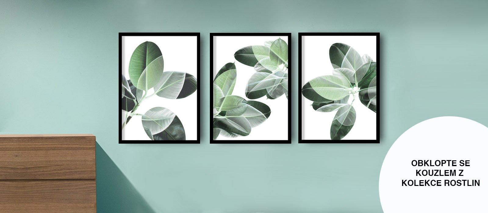 design studio la forma rostliny fikus obraz